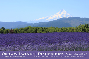 Oregon Lavender Destinations