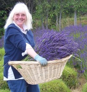 Susan appears to enjoy harvesting lavender!